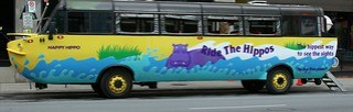 hippo tours - on the land . . . .
