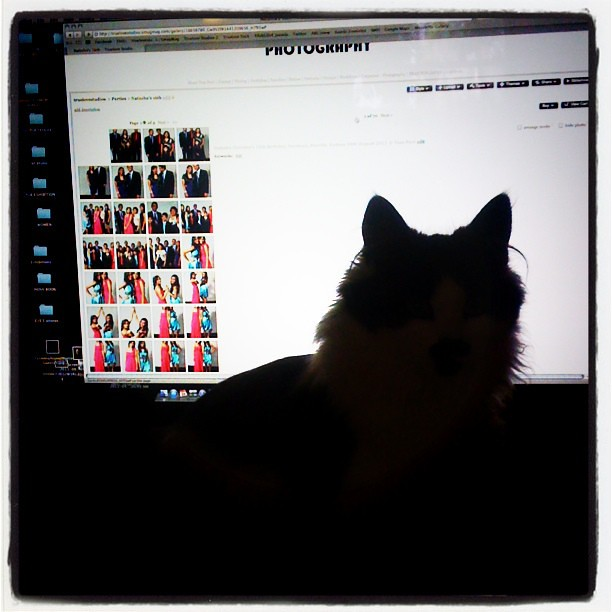 Postproduction assistant  Flowers71  Flickr