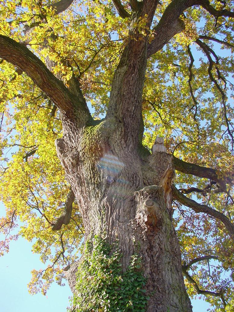 Au Pied De Mon Arbre : arbre, Yverdon, Arbre, Vivais, Heureux, Marie-Annick, Vigne., 1'000'000., Merci., Thanks, Flickr