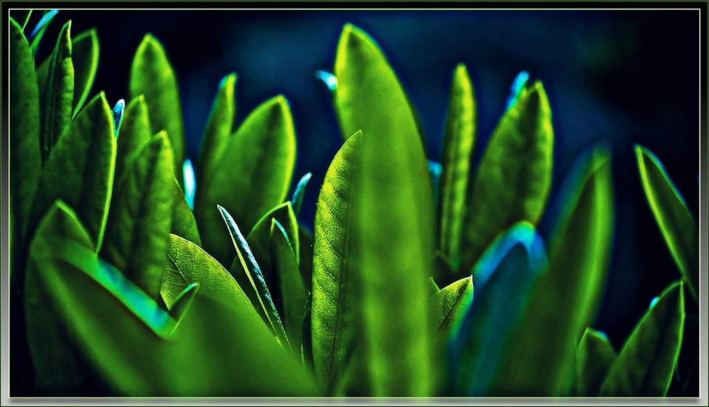 emerald texture a few