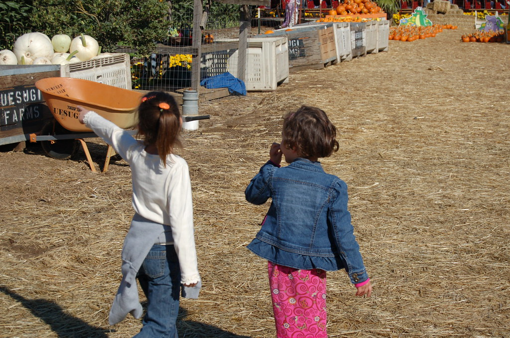 First Field Trip  at Uesugi Farms Pumpkin Park www