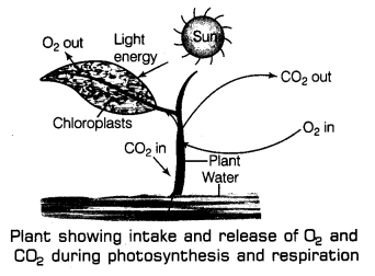 Respiration in Organisms Class 7 Notes Science Chapter 10