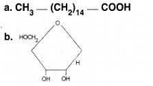 HSSLiVE Plus One Zoology Chapter Wise Previous Questions Chapter 4 Biomolecules 12