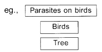 Plus Two Botany Chapter Wise Previous Questions Chapter 7 Ecosystem 4