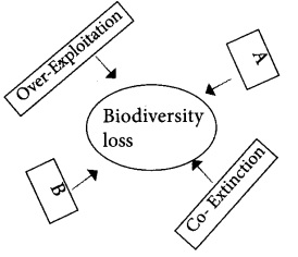 Plus Two Zoology Chapter Wise Previous Questions Chapter 8 Biodiversity and Conservation 2