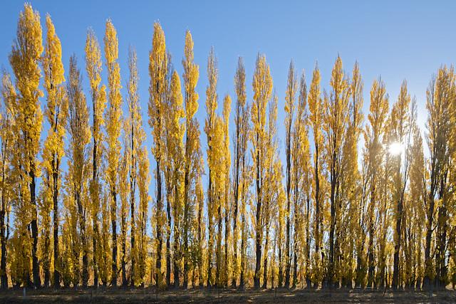 Autumn of New Zealand