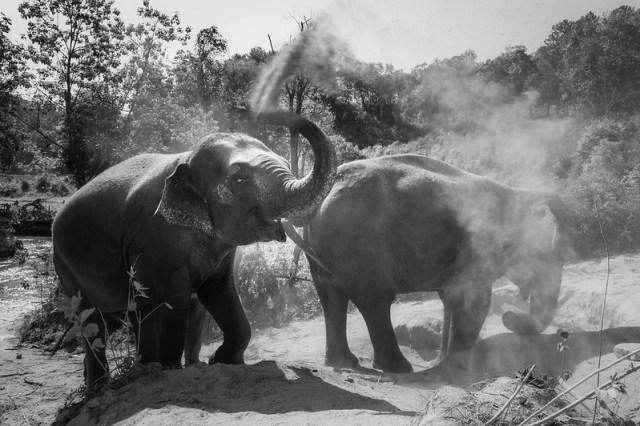 Chiang Mai / Elephant care - ตำบล แม่วิน, เชียงใหม่, Thaïlande - 18/02/2018 10h16