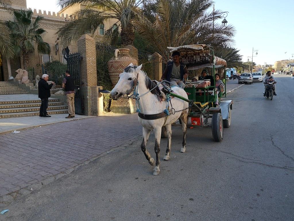 carro de caballo medio de transporte Tozeur Tunez 02
