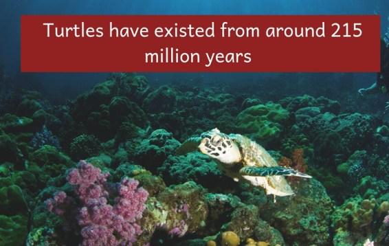 world turtle day 2019 activities