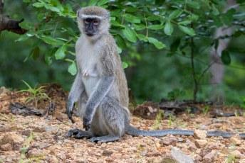 We vertrokken uit het land, deze aap een beetje beteuterd achterlatend.