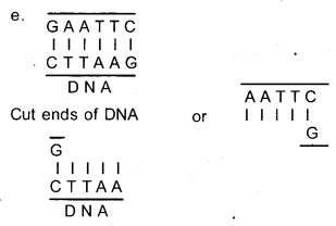 Plus Two Botany Chapter Wise Previous Questions Chapter 4 Biotechnology Principles and Processes 8