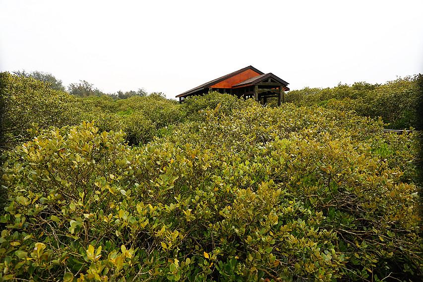 [新竹旅遊]新豐紅樹林生態保護區|新竹免費景點~紅樹林綠色步道.走在木棧道上拍出IG網美照 @VIVIYU小世界