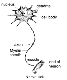 NCERT Solutions for Class 10 Science Chapter 7 2019-20 Session