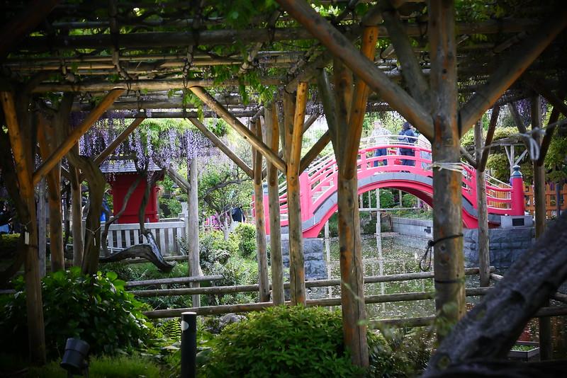 Kameido Tenjin Shrine wisteria festival 01