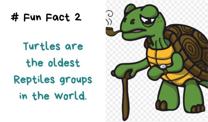 world turtle day 2019