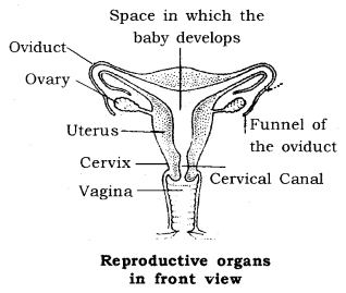 How do Organisms Reproduce Class 10 Notes Science Chapter 8 15