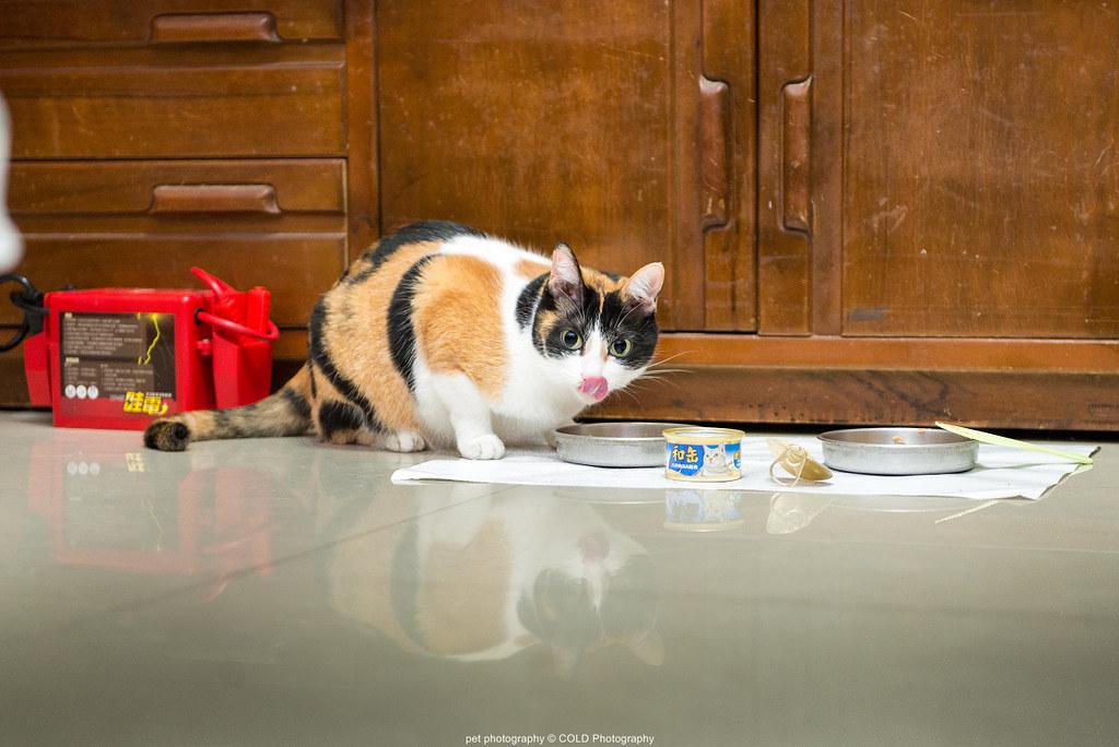 臺北寵物攝影   寵物攝影   寵物攝影 Cold Photography 官方網站   coldphotography…   Flickr