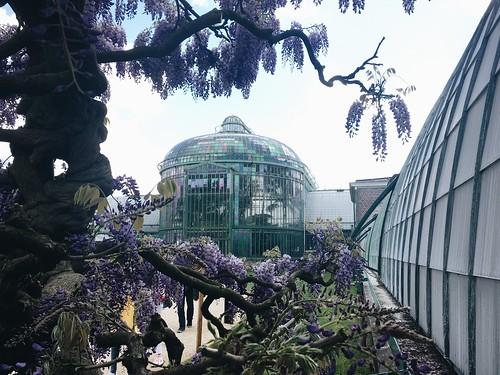 Los invernaderos Reales | Un día por Laeken