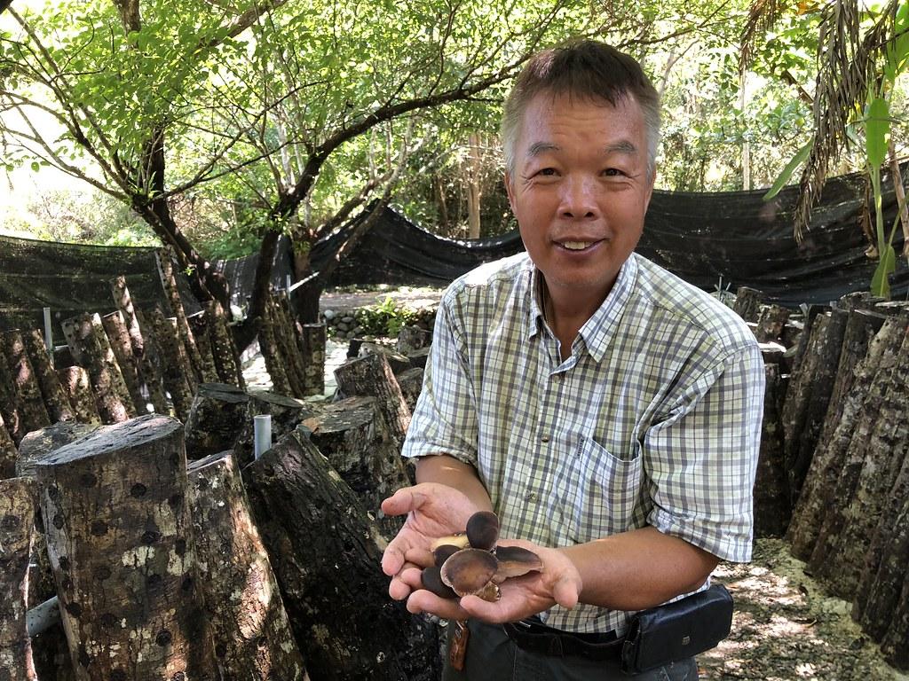 林下經濟新政策上路 林農養菇採蜜 終於合法了 | 環境資訊中心