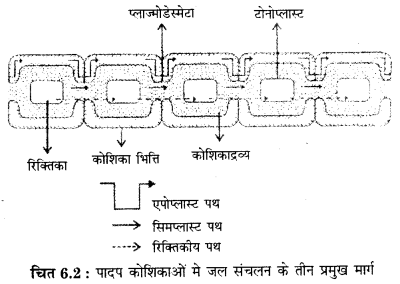 RBSE Solutions for Class 12 Biology Chapter 6 Q.1