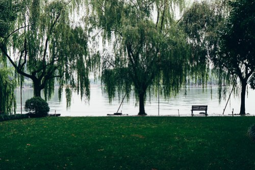 Willow trees in the West Lake (西湖), Hangzhou