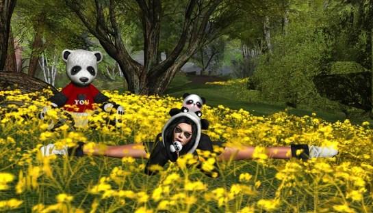 Bad, Bad Panda!!