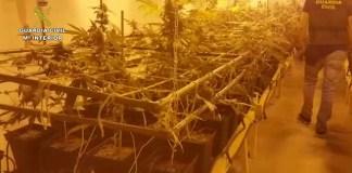 La Guardia Civil localiza una plantación de marihuana en Arrecife