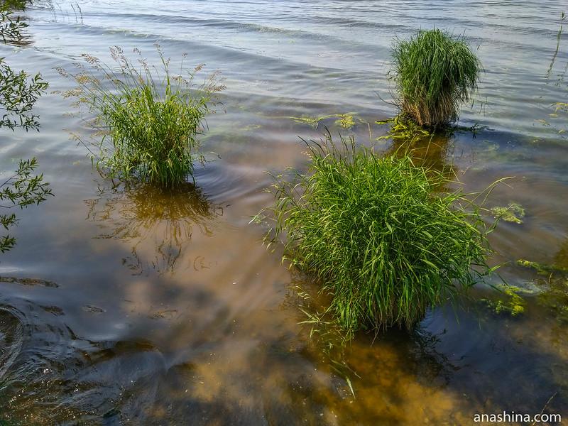 Прибрежная растительность