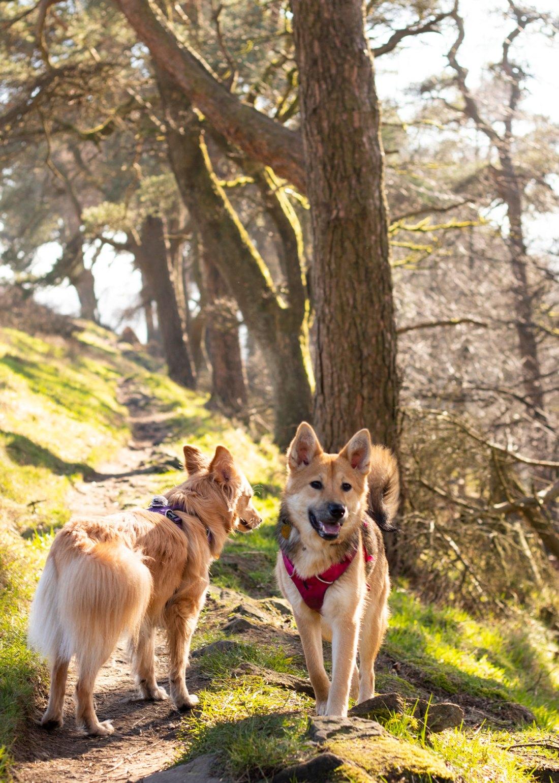 Errwater-Hall-Dog-Walk-in-Peak-District