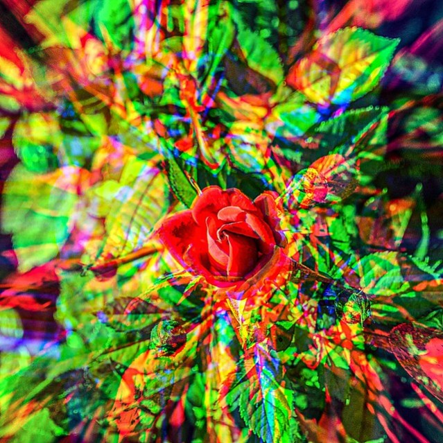 VERY colorful photo of a rose.