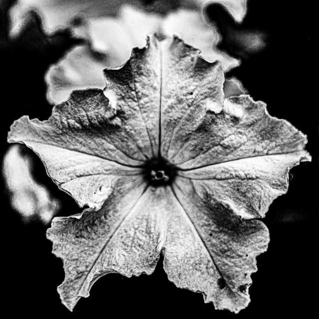 Dark, gothy photo of a flower.