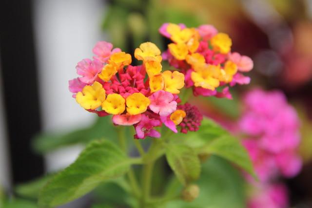 2019-06-12_Botanic_Garden_032