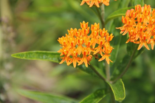 2019-06-12_Botanic_Garden_022