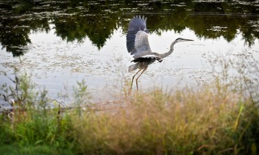 MW and the Heron
