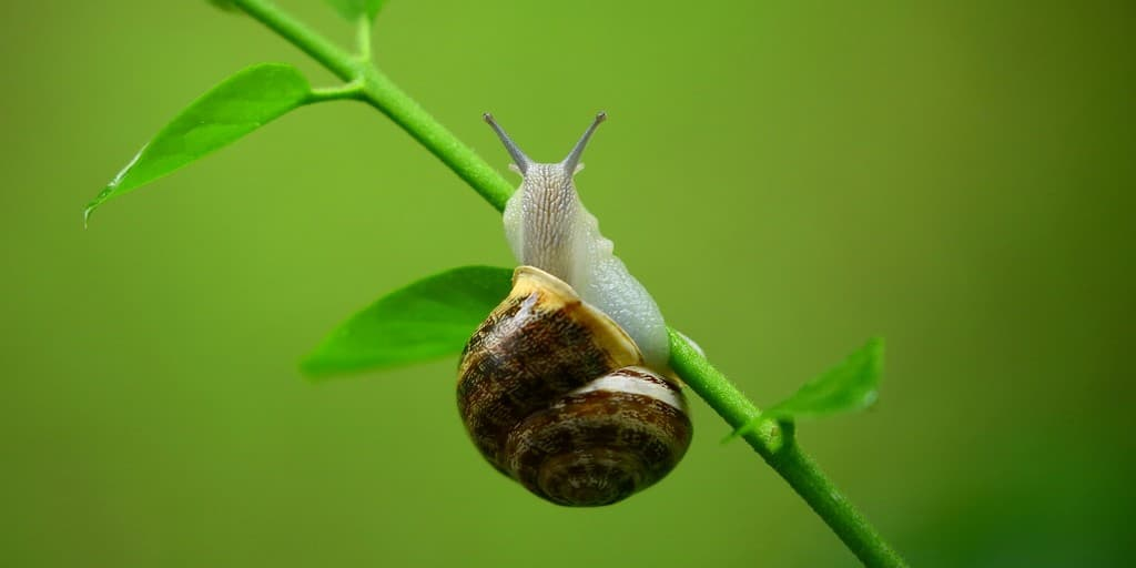 bave-escargots-colle