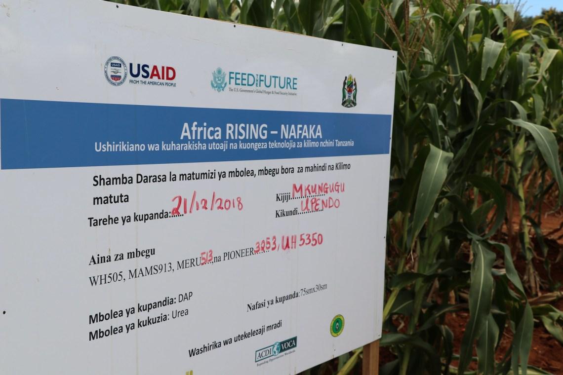 Africa RISING - NAFAKA Project demonstration site. Photo credit: Bevin Bhoke/IITA.