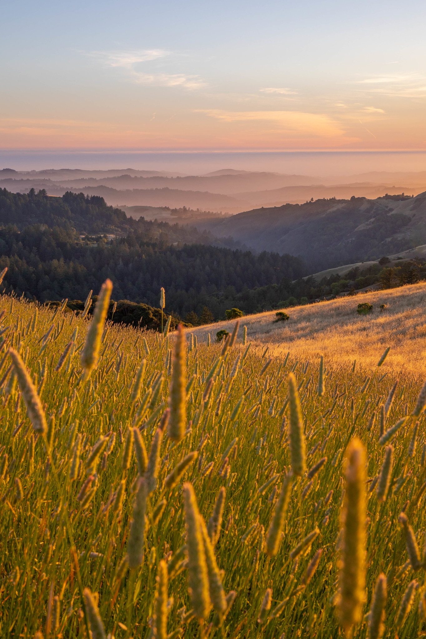 06.23. Russian Ridge Open Space Preserve