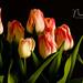 Wooden Shoe Tulip Art