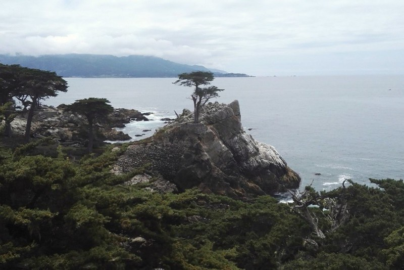The Lone Cypress Tree, 17-Mile-Drive, California