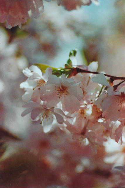 in the meantime and in cherry blossom time