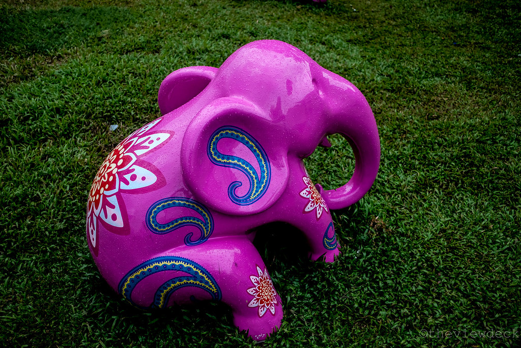 Elephant in Little india