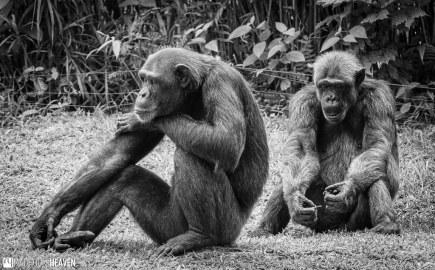 Singapore Zoo - 0673