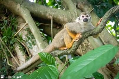 Singapore Zoo - 0529