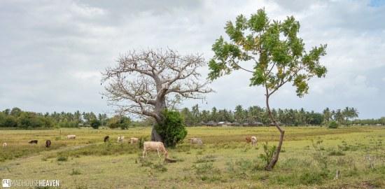 Kenya - 1613