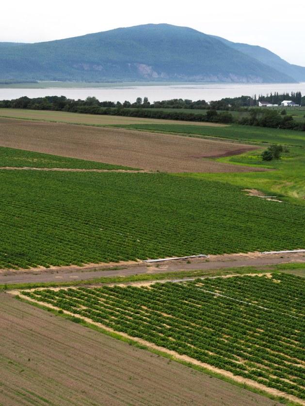 Ile d'Orléans farmland, Quebec