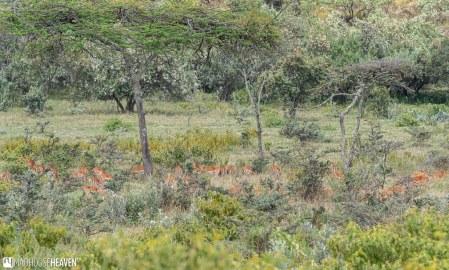 Kenya - 2136