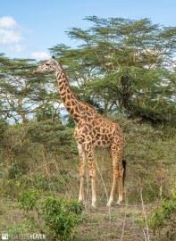 Kenya - 2328