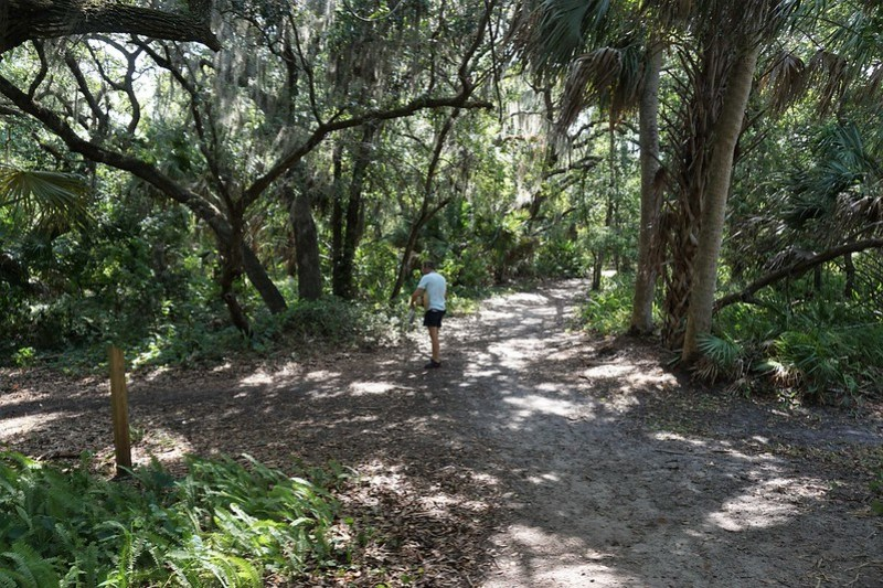Green Deane of Eat the Weeds - Wild Edibles Class in Sarasota, June 2019
