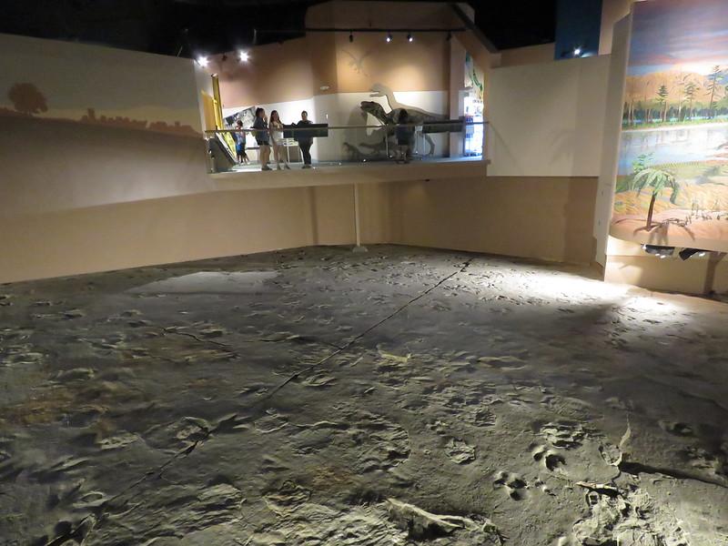 Coelophysis Dinosaur Footprint