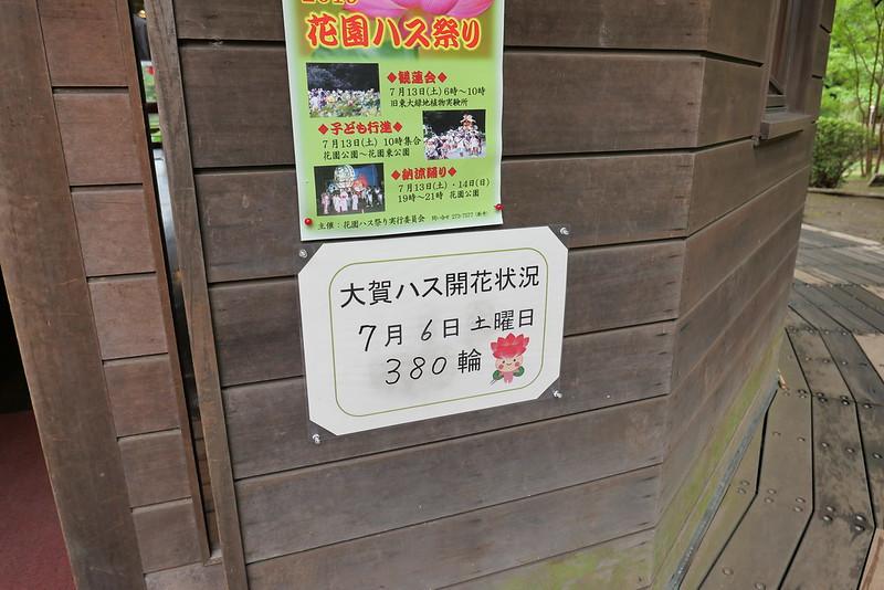 大賀ハス 14